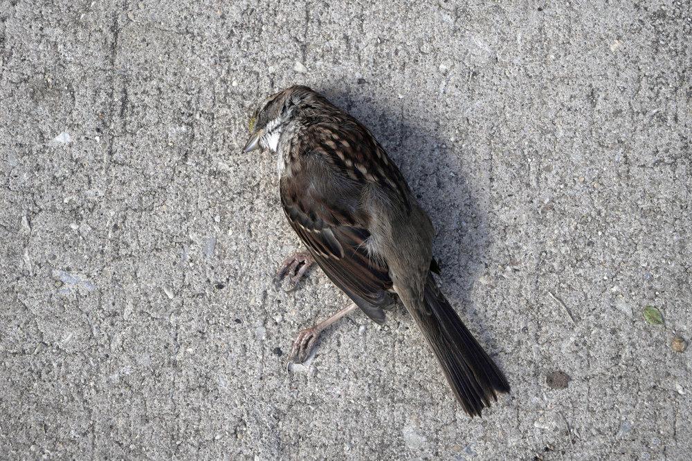 DED_BIRD.jpg