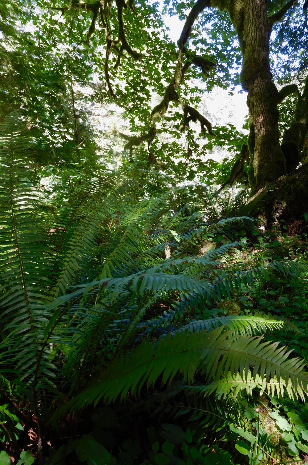 TreeSong Nature Awareness and Retreat Center  https://treesongnatureawareness.org/