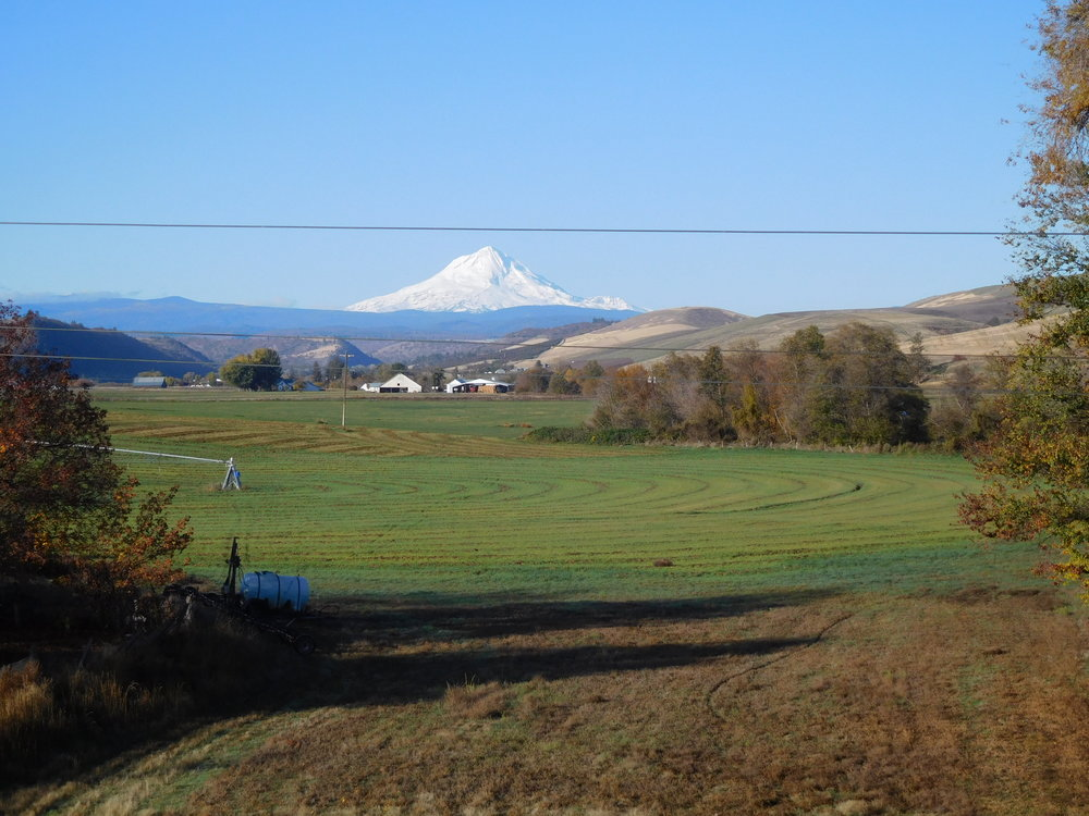 Mt Hood, taken from Dufur, OR while on a Portland Women Writer retreat. Great opportunity to generate new poems and refine old ones. An example of the lovely fall weather Oregon has been experiencing.