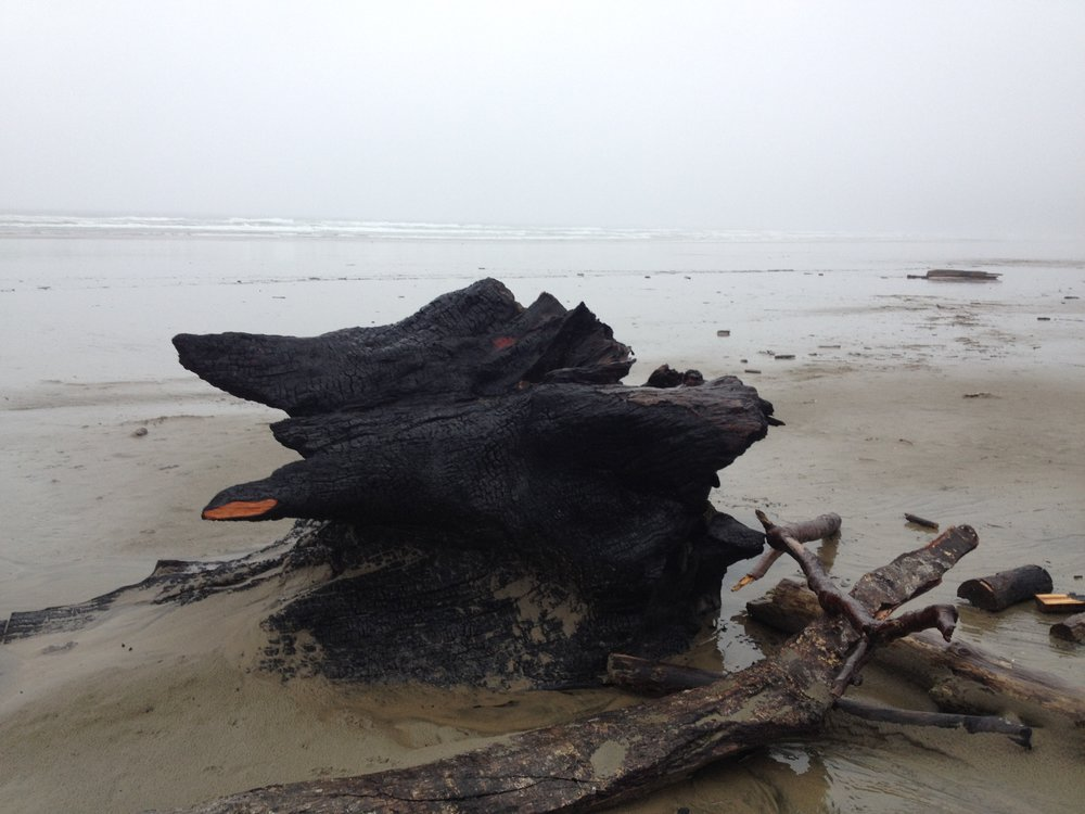 Charred stump, Manzanita, Oregon April 2017