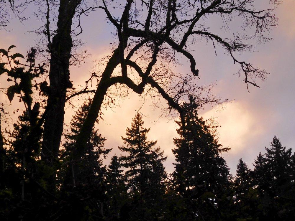 Taking time in nature helps me when I am grieving. Elk Rock Garden, Portland Oregon 11/23/17.