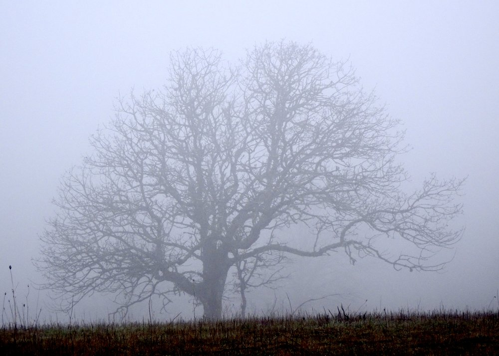 Trees offer wisdom and solace even when fog envelops the inner landscape. photo by anne richardson, Baskett Slough Wildlife National Refuge, Willamette Valley Oregon, March, 25, 2019.