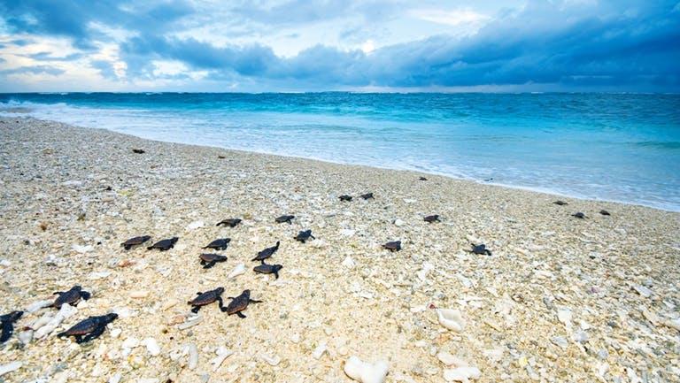 lei-lady-elliot-island-turtles.jpg