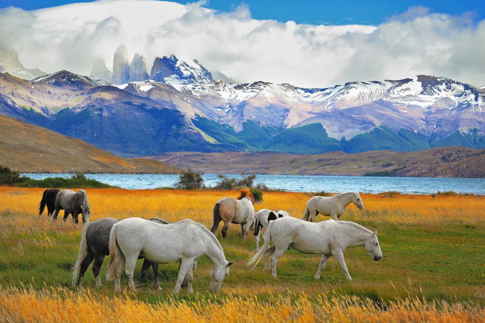 Torres del Paine horse riding