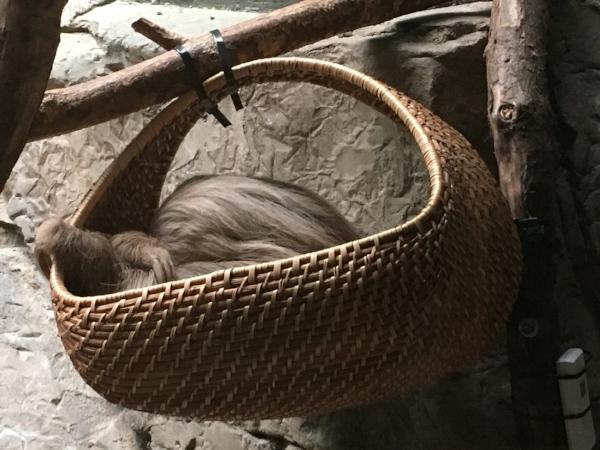 sloth nap!