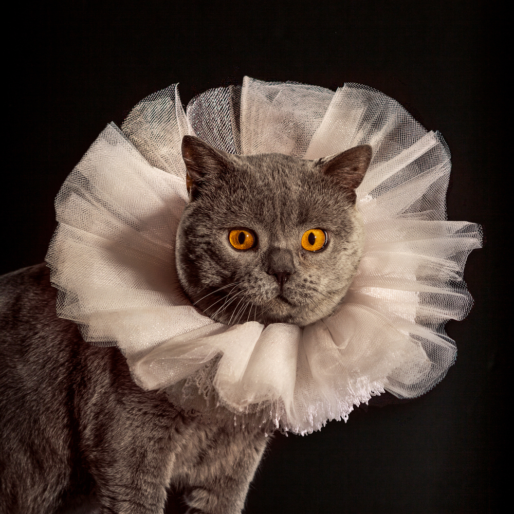 1_Holly_Andres_Elizabethan Cat Collars.jpg