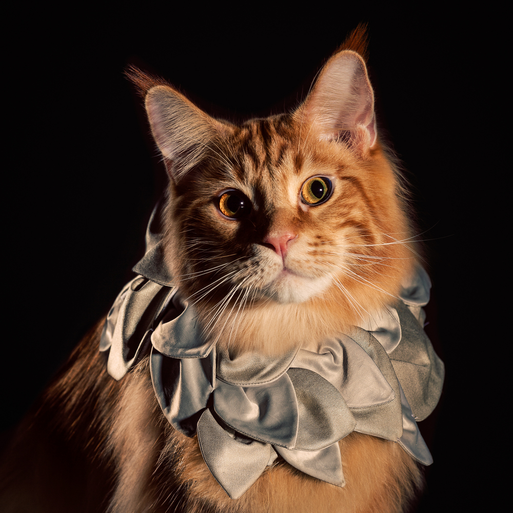 4_Holly_Andres_Elizabethan Cat Collars.jpg