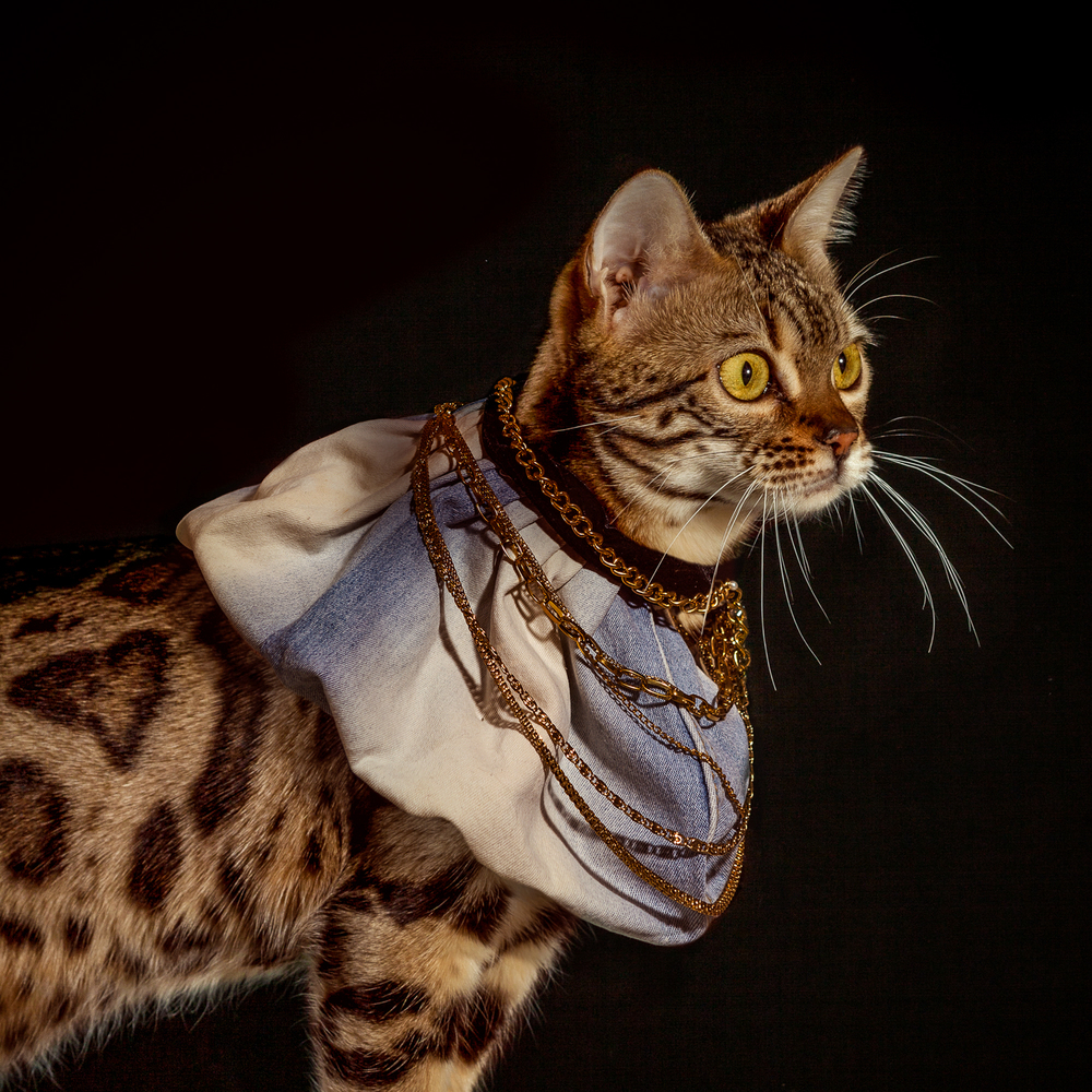 6_Holly_Andres_Elizabethan Cat Collars_ (7 of 10).jpg