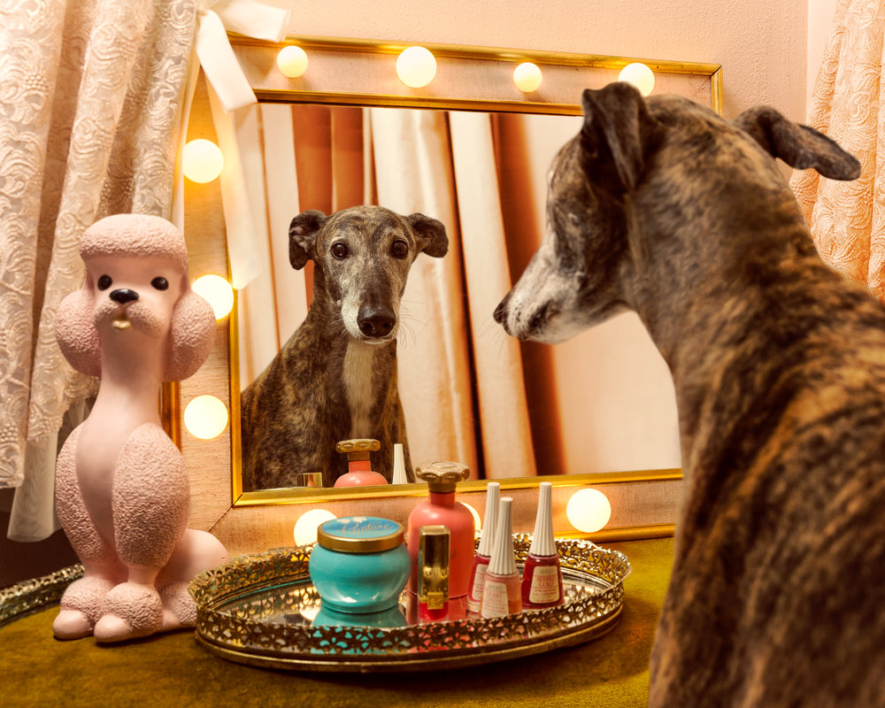 160527_Greyhound_Vanity_FINAL_1.jpg