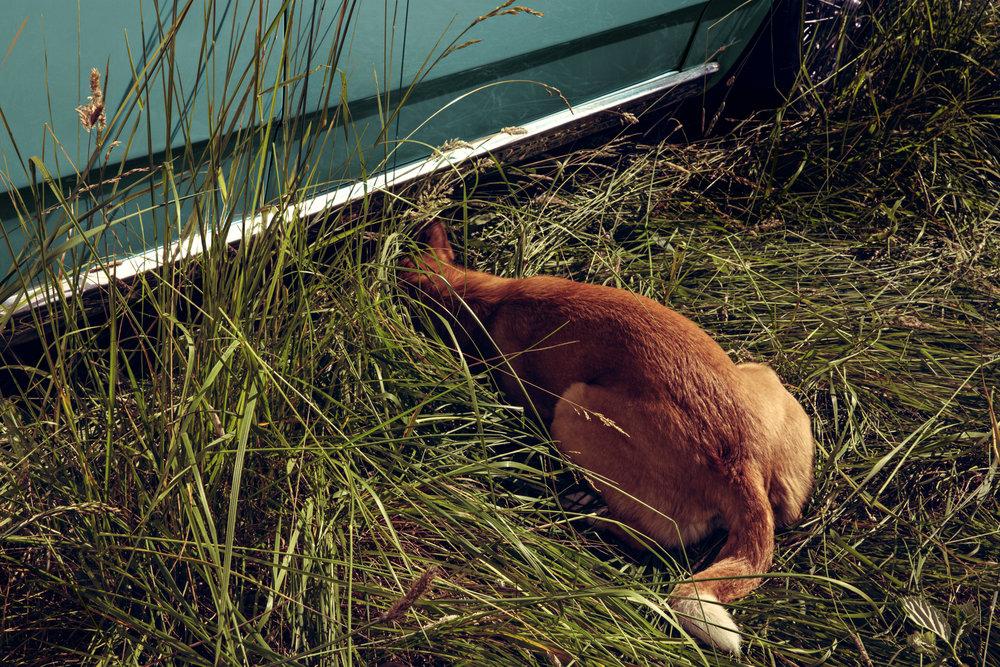 5_Fallen Fawn_Andres_ Stray Dog_ Elk Rock Island.jpg