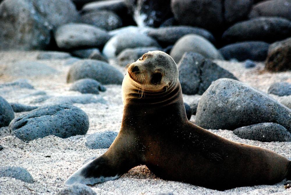 Galapagos, Island