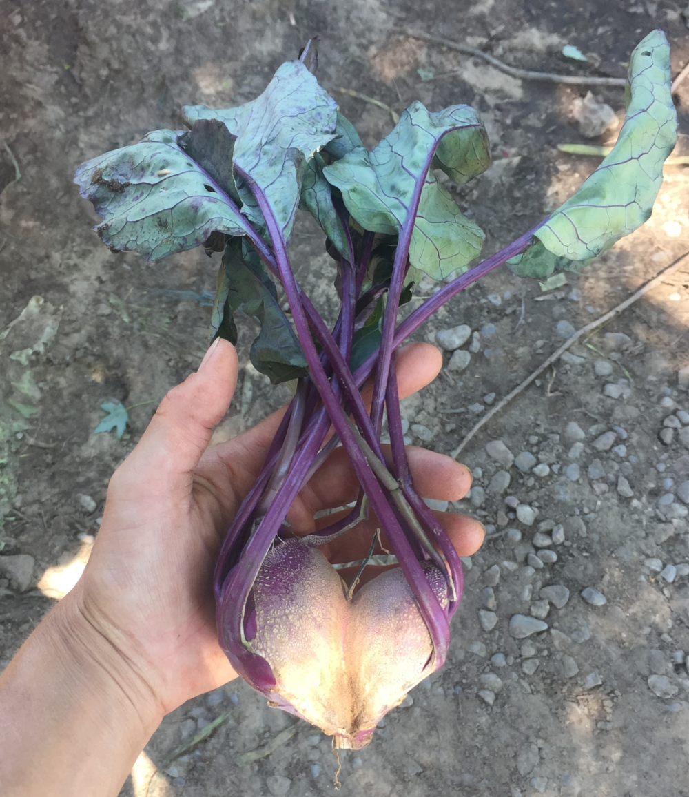 kohlrabi-heart-shaped