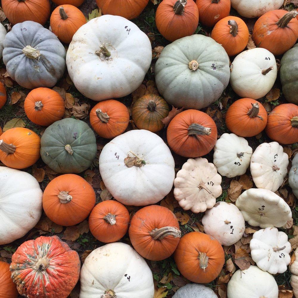 pumpkins + squash in PEC