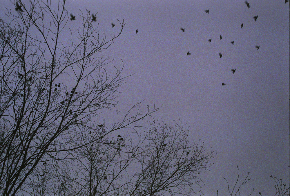 birds flying.jpg