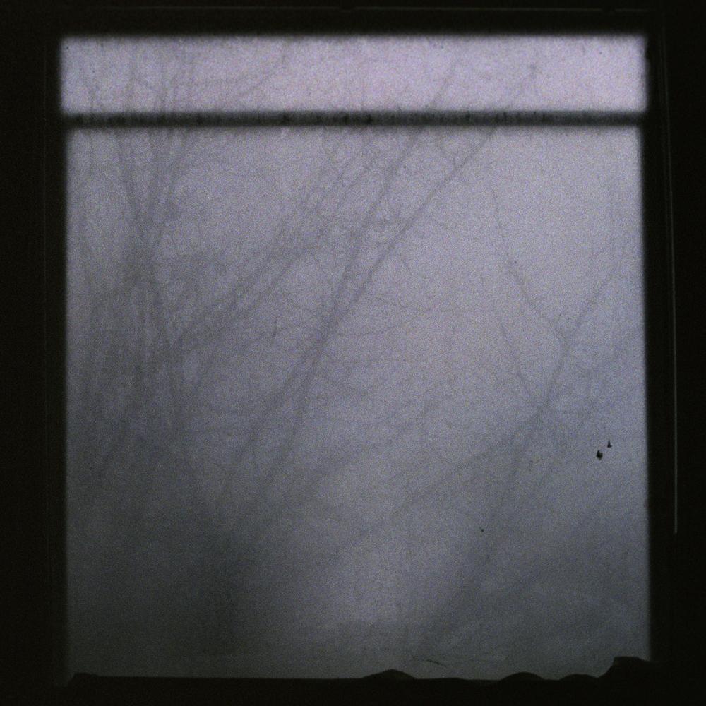 tree through fog.jpg