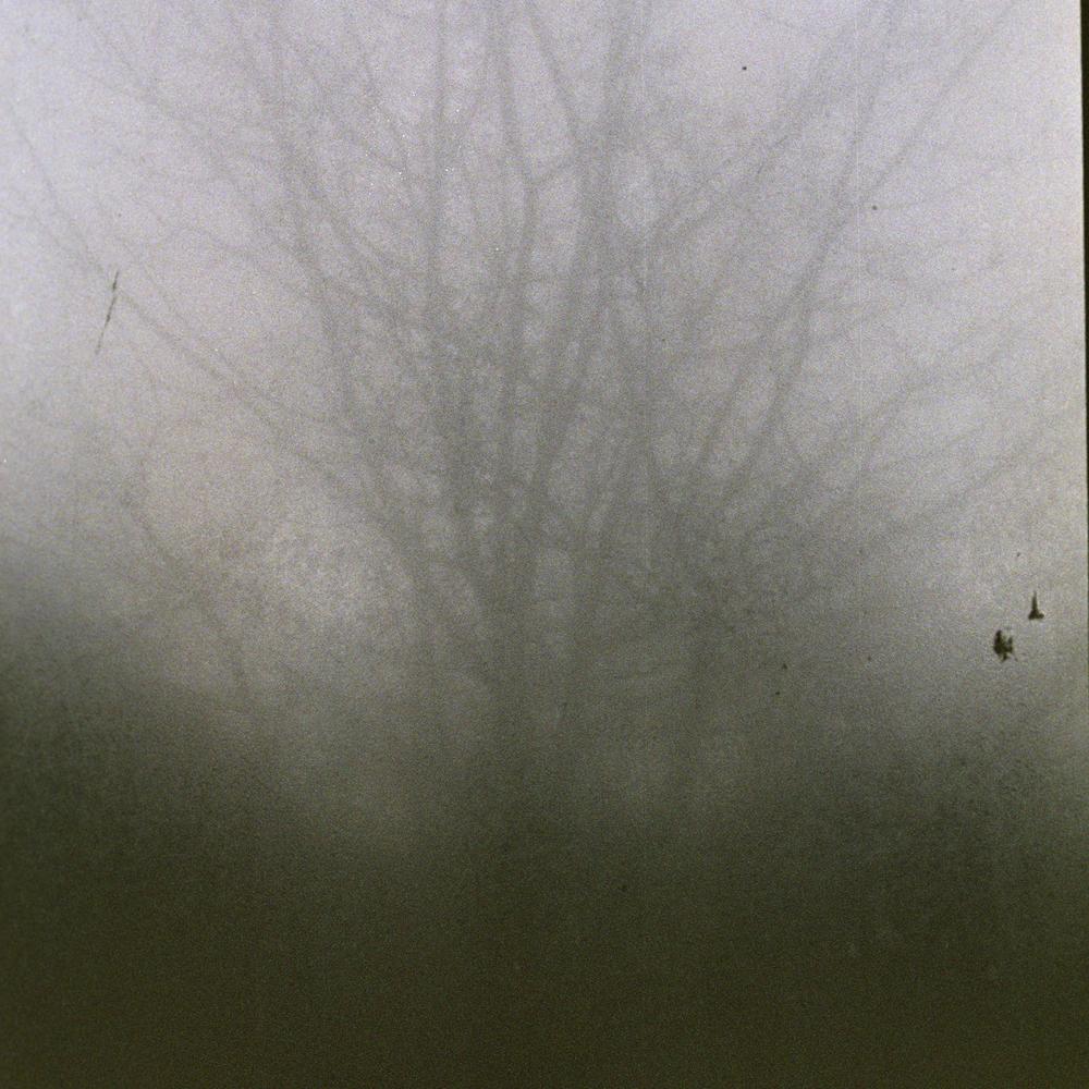 tree and foggy window.jpg