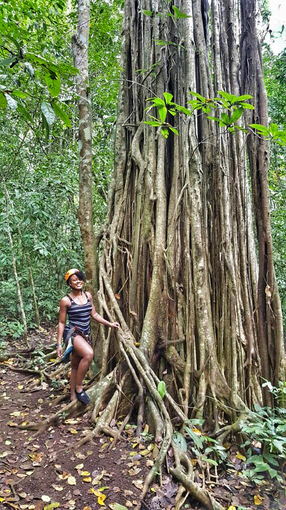 Look how huge this tree is!!