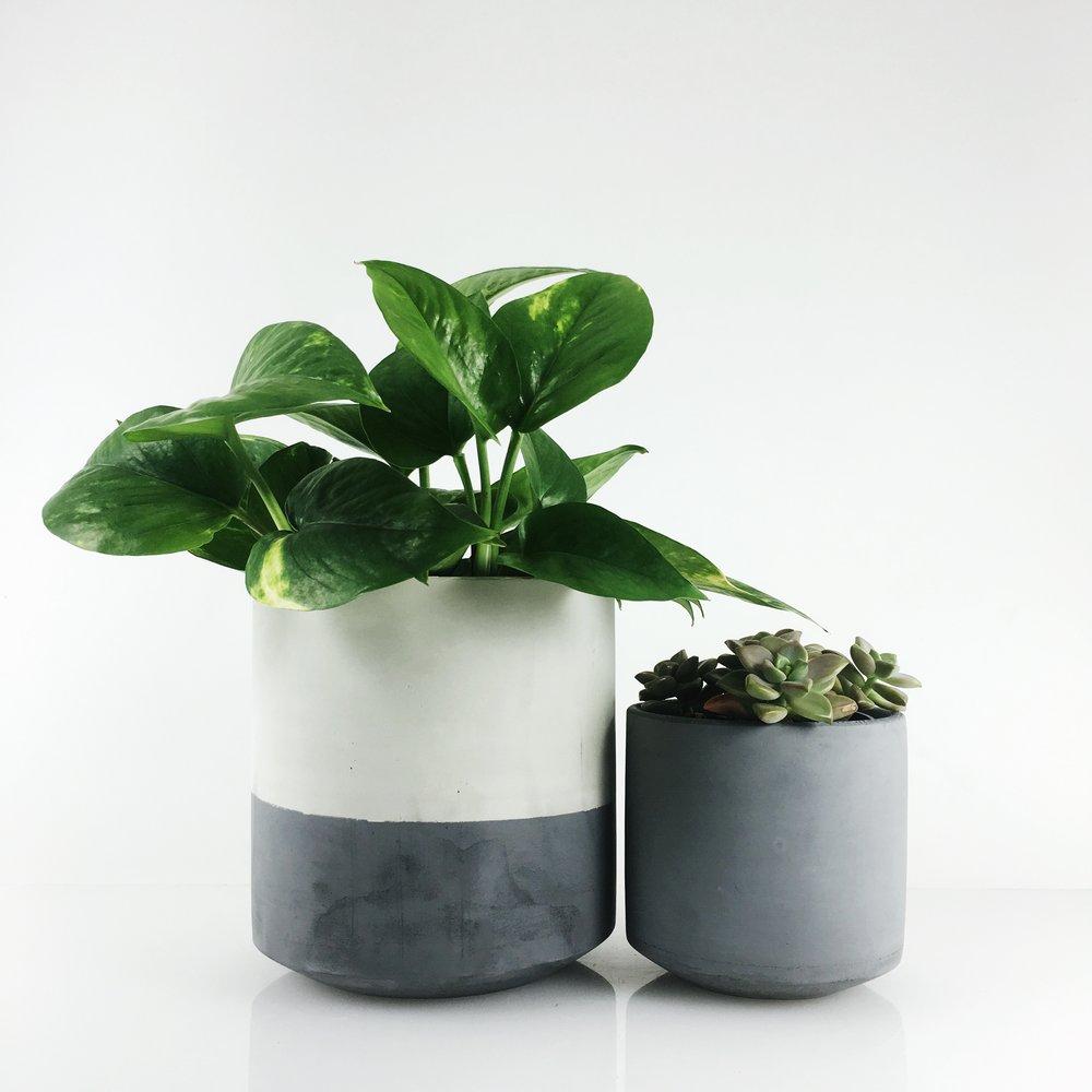 SETTLEWELL - Straight Sided Pot - 2.JPG
