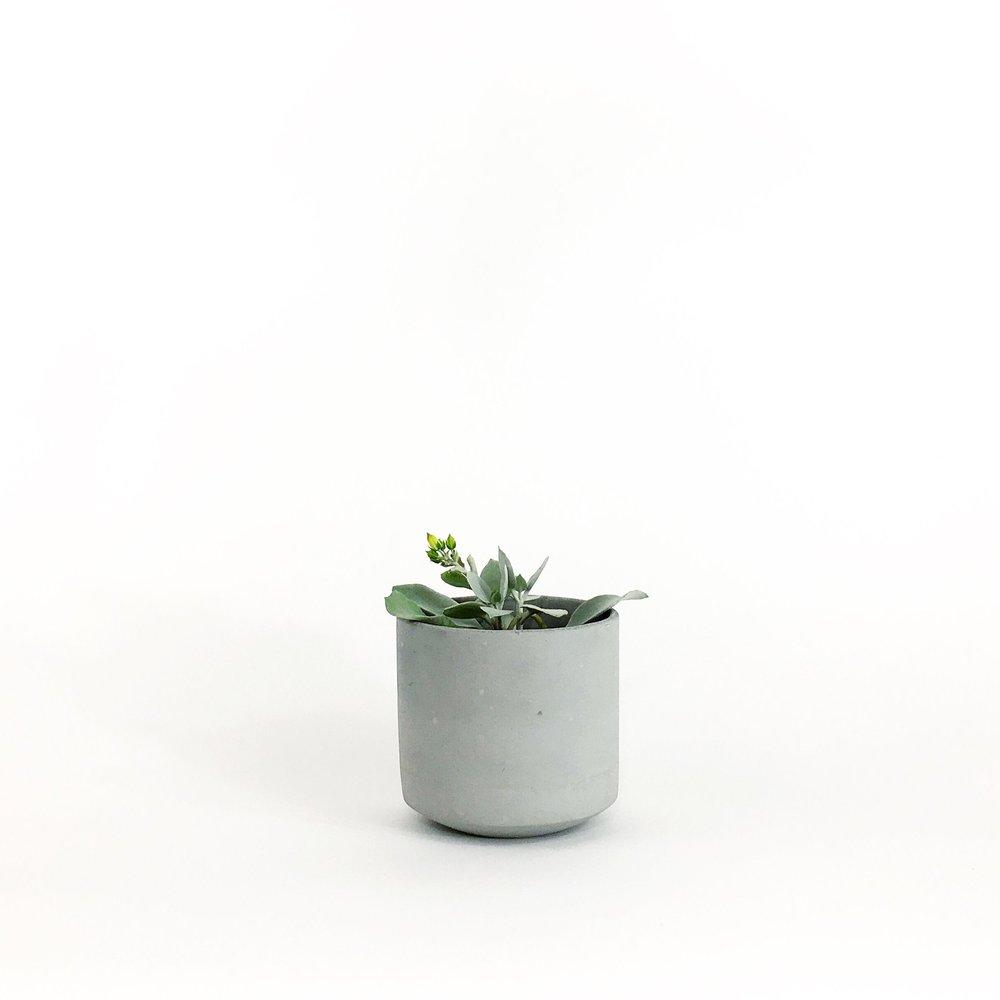 SETTLEWELL - Straight Sided Pot - 4.JPG