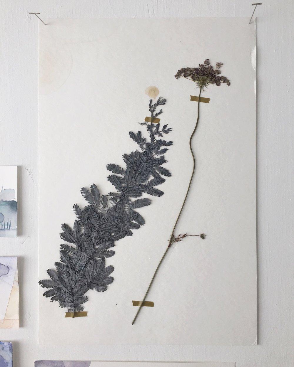 pressed   pressed botanicals, cotton paper  2017