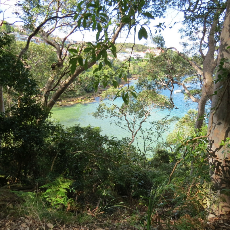 Crystal clear blue water in Sydney Harbour as seen from the forest