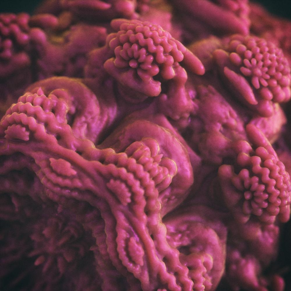fractal_01FACE.png