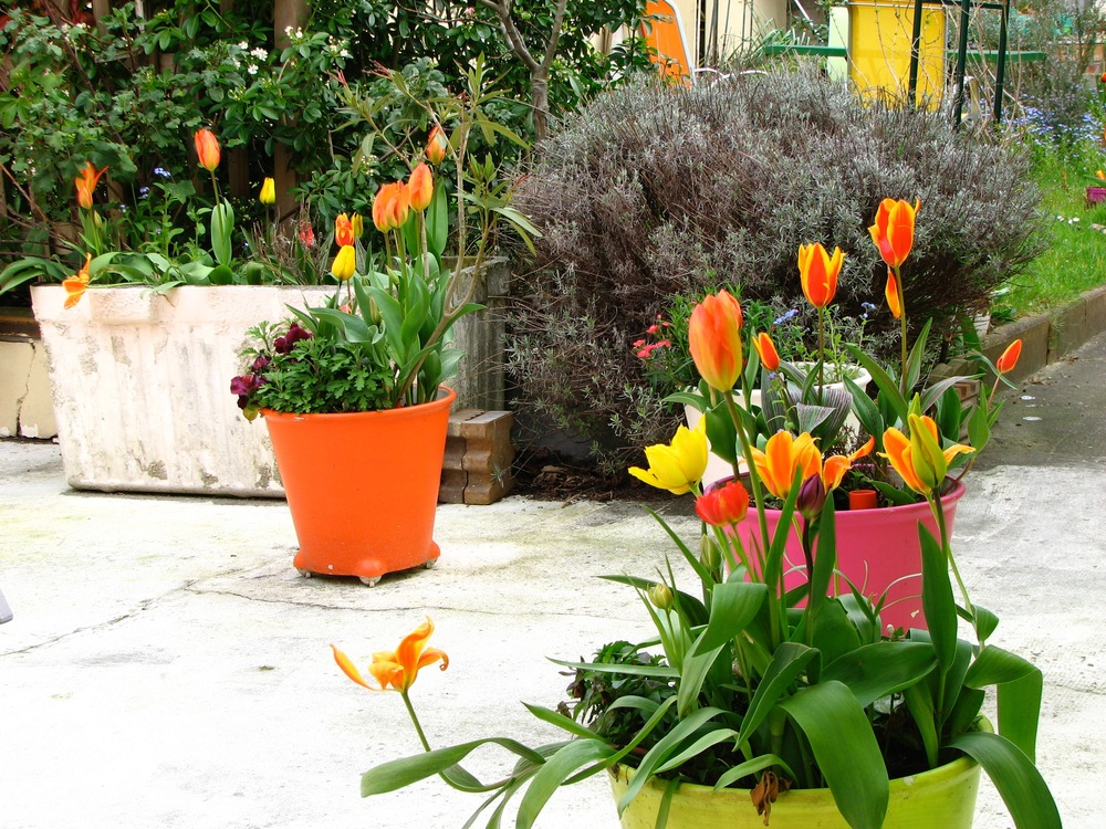 histoire-padma-studio-deco-tulipes-3.jpg