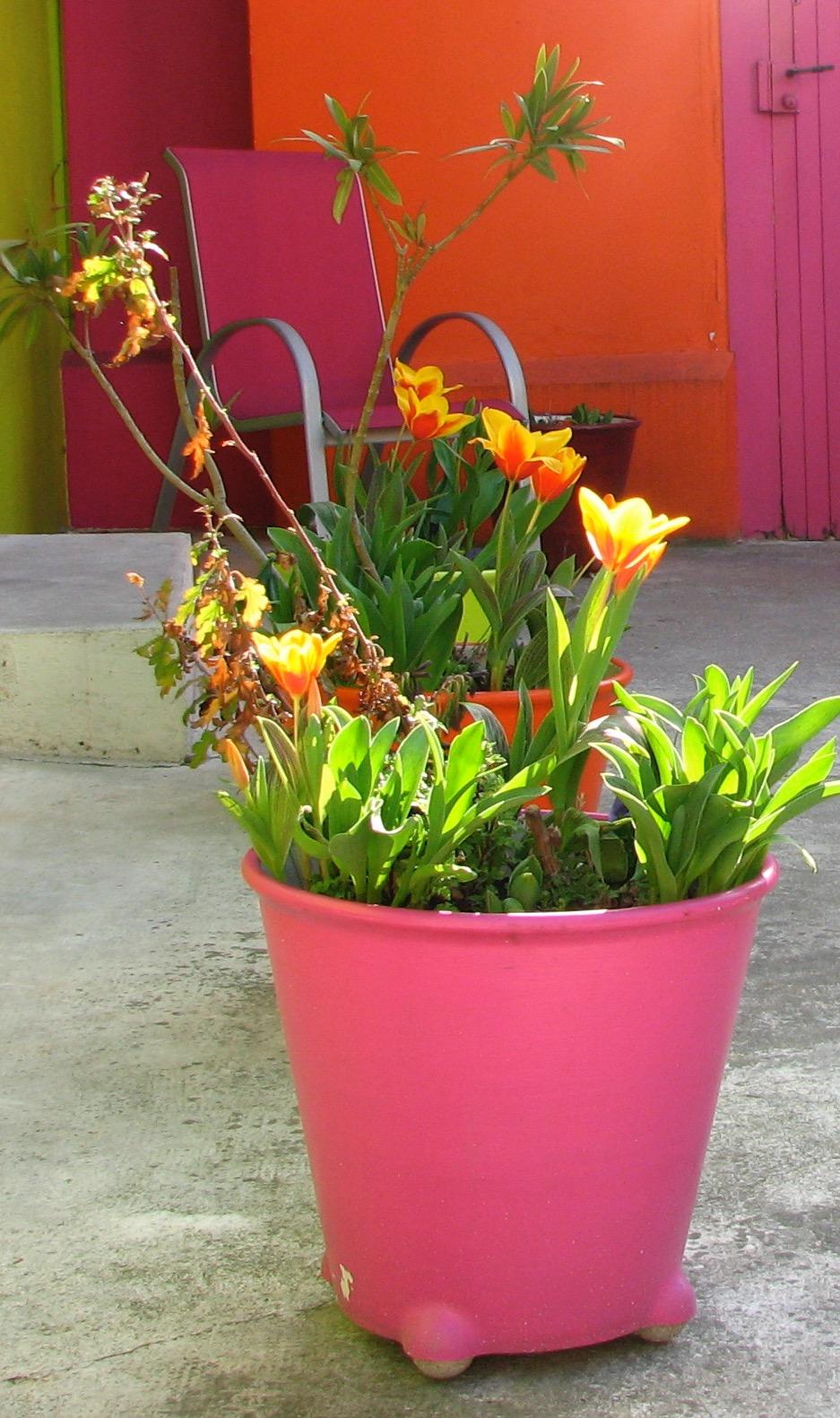 padma-studio-deco-tulipes.jpg