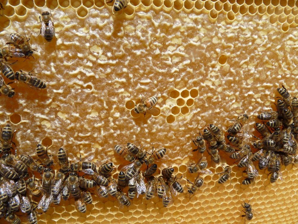 miel-de-fontenay-bio