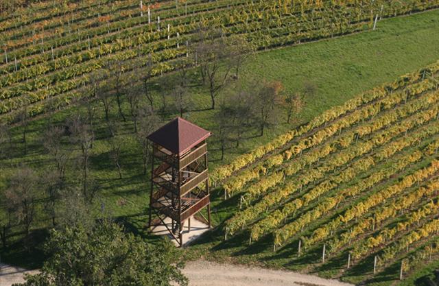 vinograd-puhan.jpg