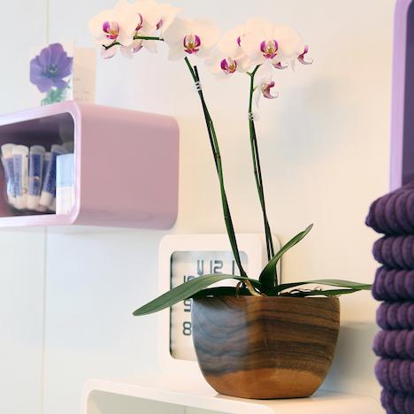 Orkideer lyser opp hverdagen.