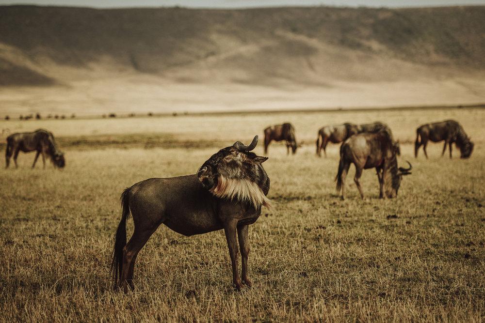 Oier Aso  http://www.artefotobodas.com