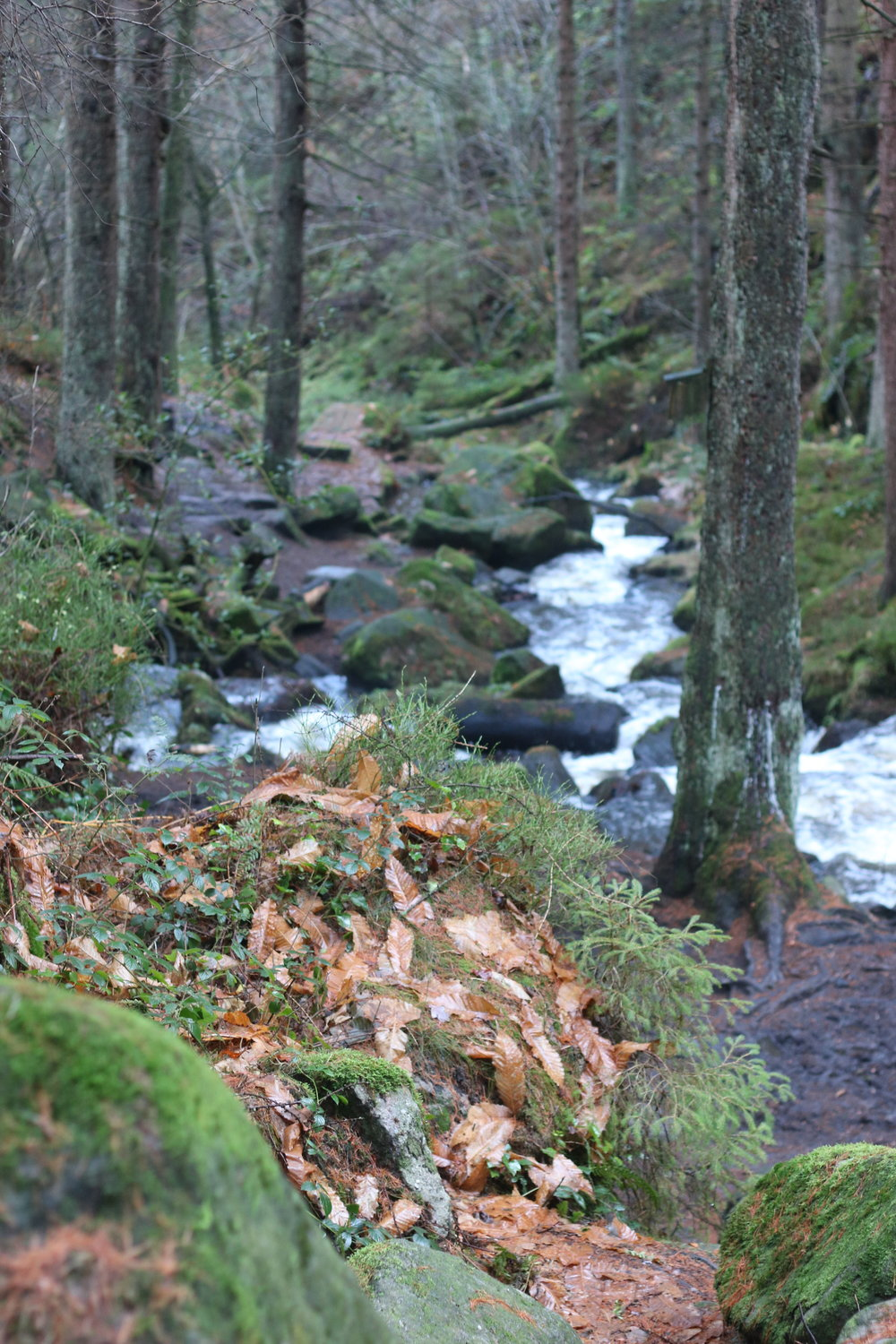 One of our favourite walks at Wyming Brook