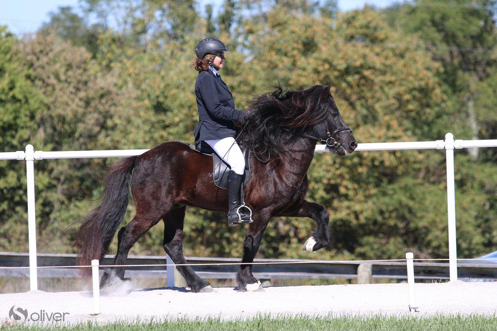 Gosi-Icelandic-Stallion.jpg