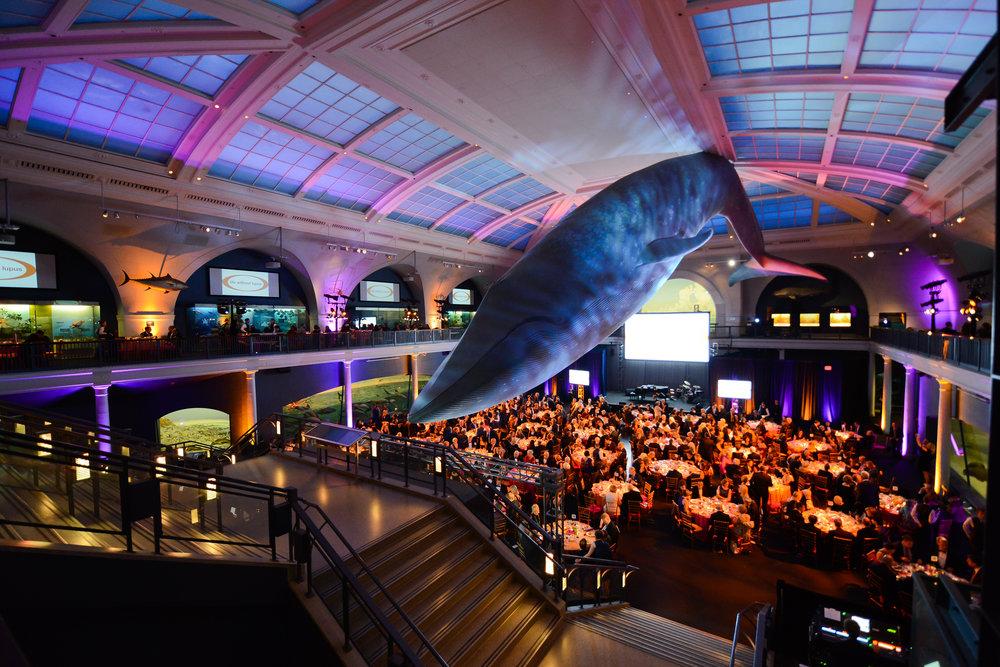 Atmosphere Whale Room.jpg