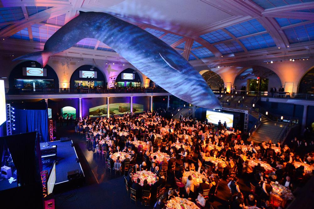 Atmosphere Whale Room 6.jpg