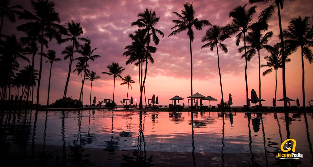 blog - sunset pool beach palm tree.jpeg