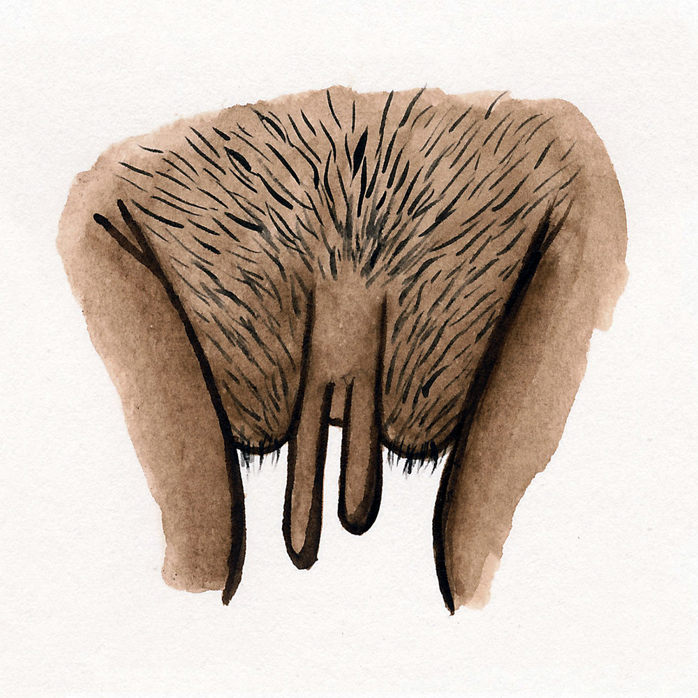 Hilde Atalanta - The Vulva Gallery - Brown #1.jpg