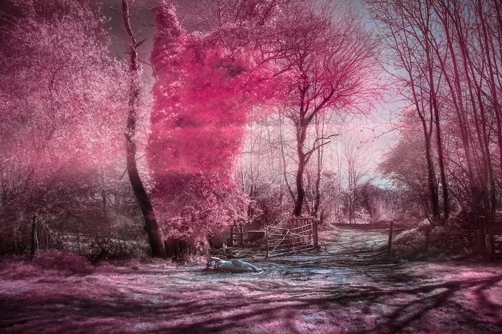 venus infrared 72dpi.jpg