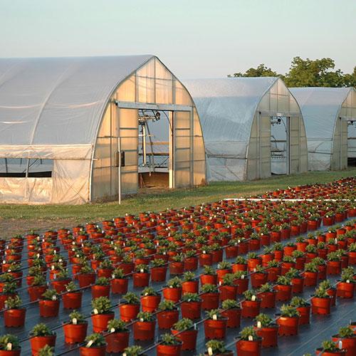 greenhouse farm truck