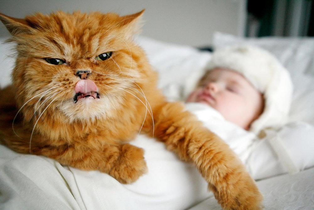 pet-baby-cat-portrait-lifestyle-candid-journalistic-ruthie-hauge-photography.jpg