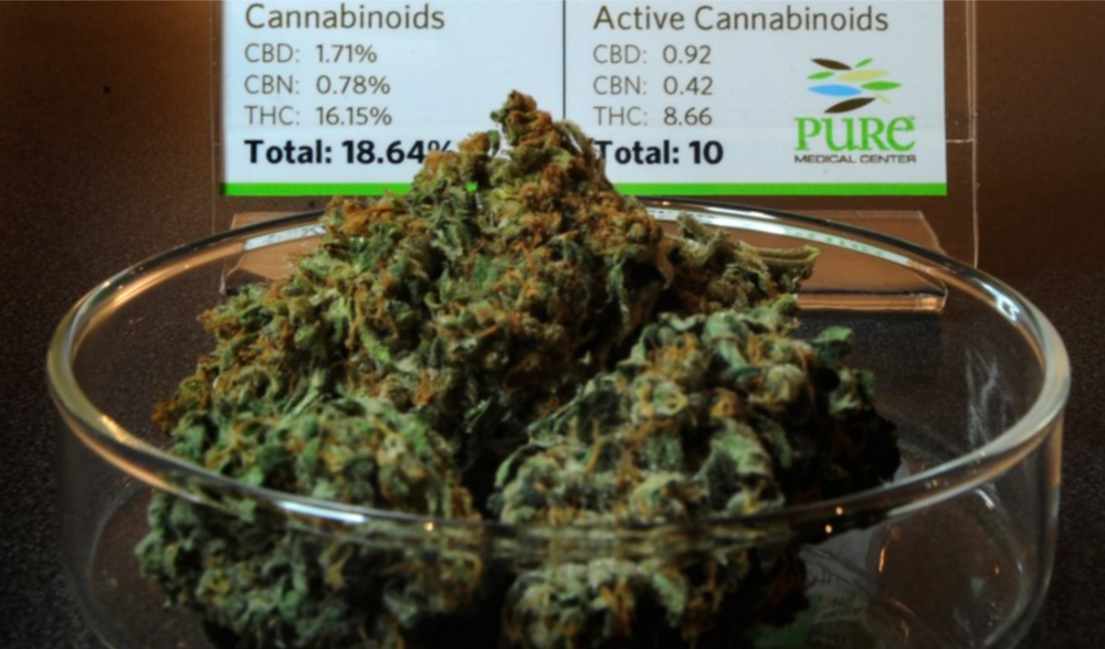 Strains are tested for levels of various cannabinoids to help patients and budtenders know the strength and traits of the plant. This sample of Stevie Wonder is from Pure Medical Dispensary. (Joe Amon, Denver Post file)