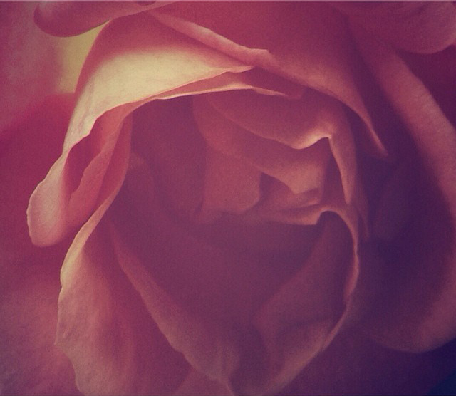 rose crop 2.jpg