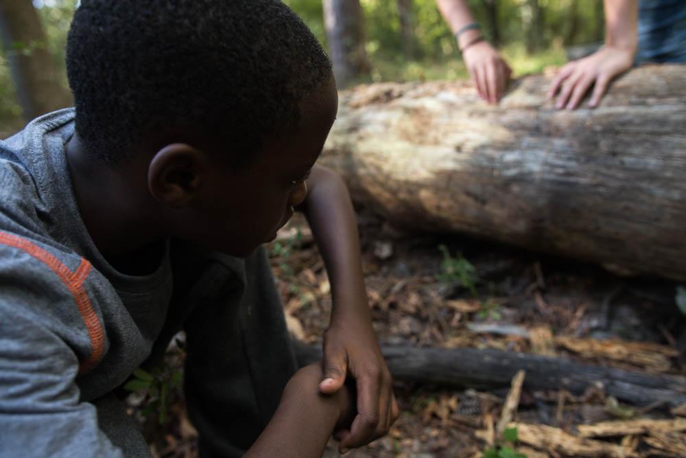 elbosque - Los estudiantes son conscientes de la diversidad de especies de plantas y animales que se encuentran en nuestro bosque mientras exploran la fuerza de este ecosistema.