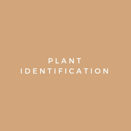 Steps to take to positive identify a plant without having an app, book, or resource guide handy.