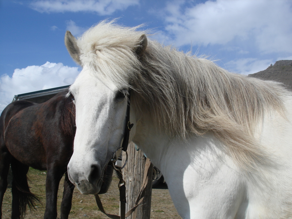 Horsepicture.jpg