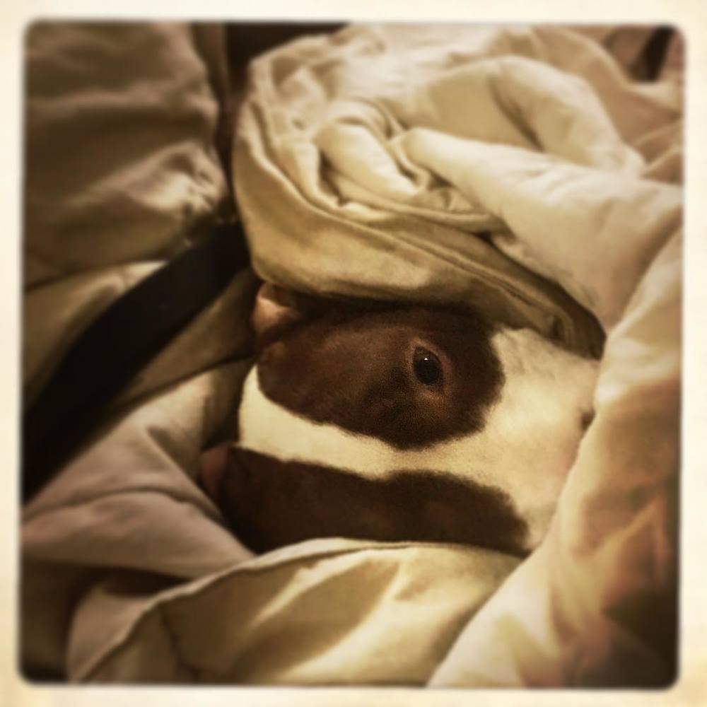 Day 22: it was hard to dig her out of bed this morning, but this girl got spayed today.