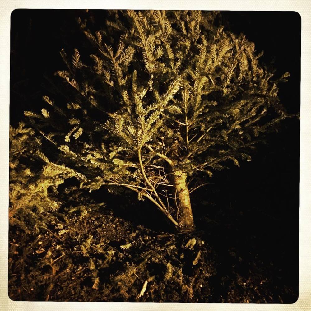 Day 54: post-xmas tree.