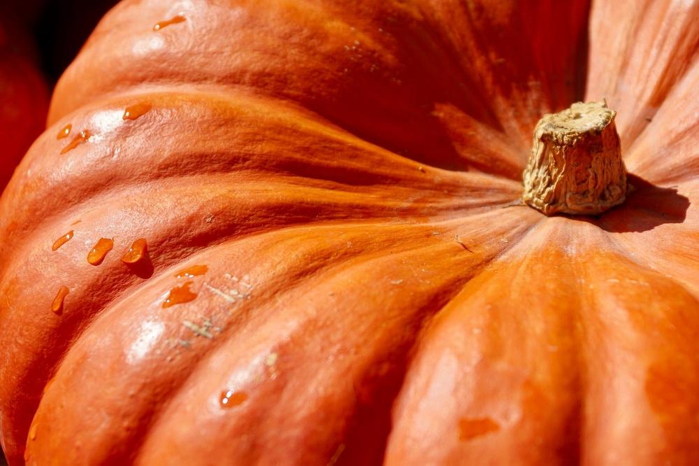 pumpkin-2736964_1920.jpg