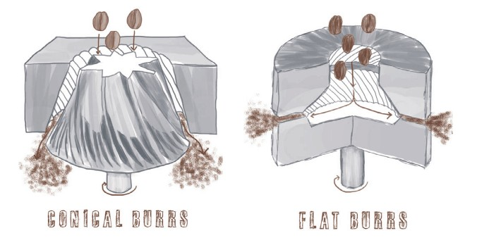 flat-vs-conical-burr-grinder.jpg